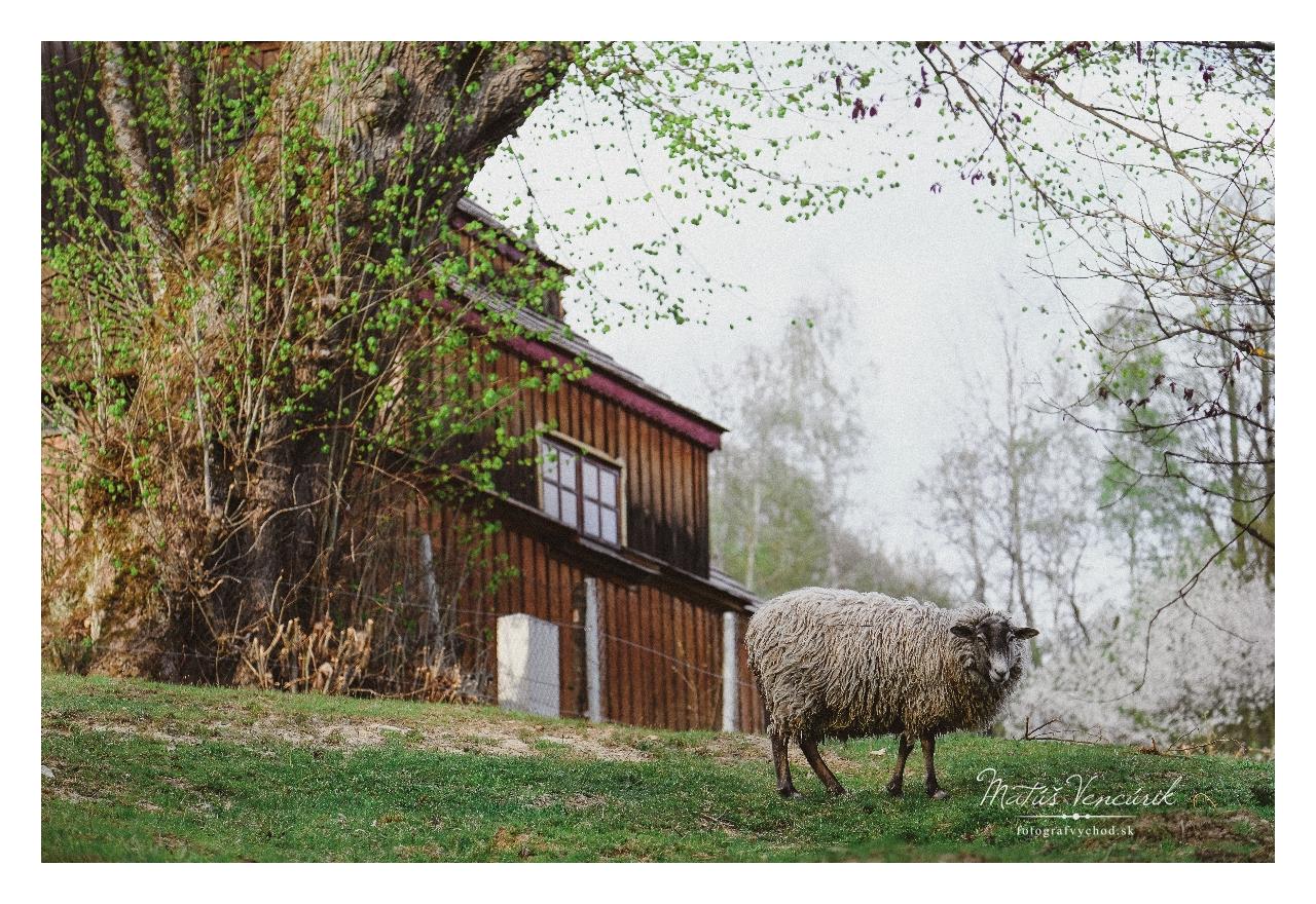 Obec Príkra, fotografie, Vencúrik, Najmenšia obec na Slovensku